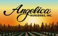 Angelica Nurseries, Inc. Jobs
