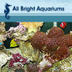All Bright Aquariums Jobs